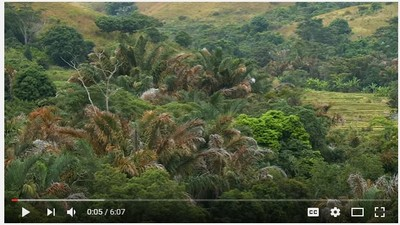 Sustainably sourced raffia: community-based conservation in Madagascar