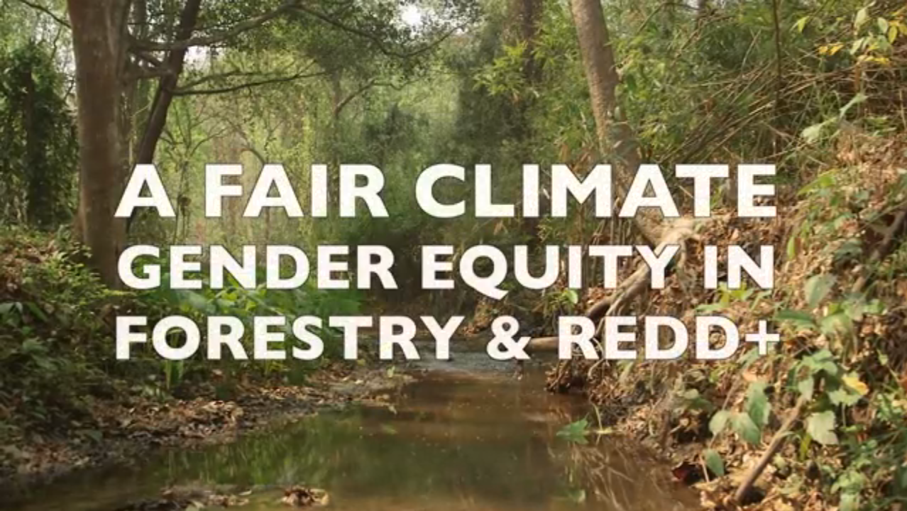 A Fair Climate: Gender Equity in REDD+