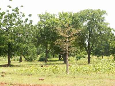 Burkina Faso Farmers Lead the Way on Food Security and Climate Change Resilience