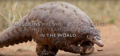 Wildlife Crime Tech Challenge: The Uni. of Washington is using DNA tech to protect pangolins