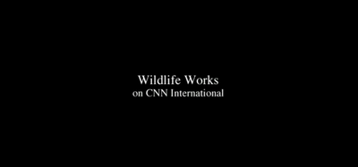 Video-Wildlife Works