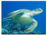 USAID Works With Private Sector to Encourage Sea Turtle Conservation Efforts